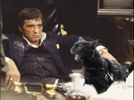 al pacino cat