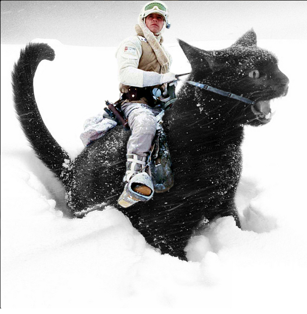 luke skywalker cat
